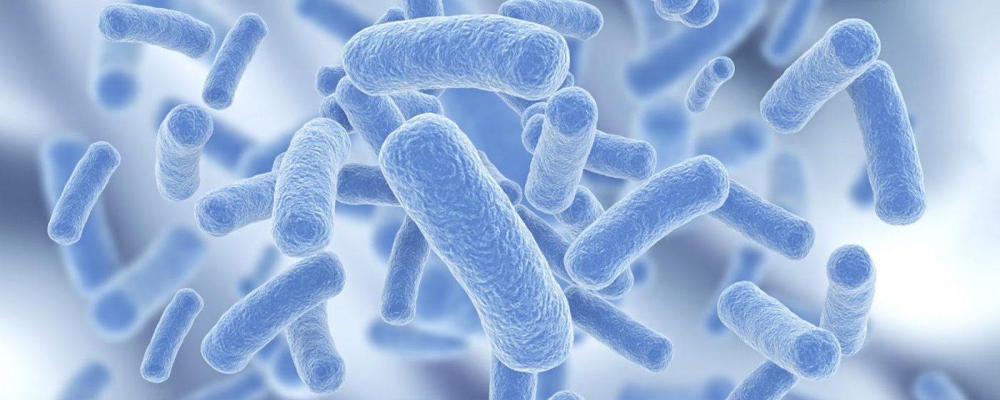 Il Microbioma intestinale