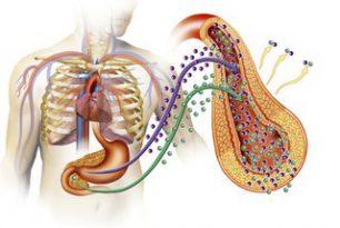 Può il nostro Microbioma Intestinale proteggerci dall'insorgenza di Diabete di 2° tipo?