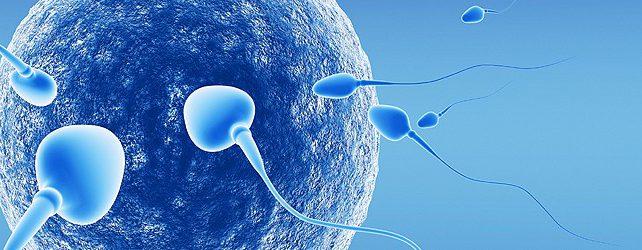 Probiotici e Sterilità Maschile