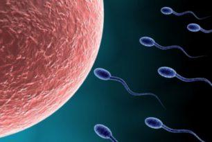Probiotici e Sterilità Femminile